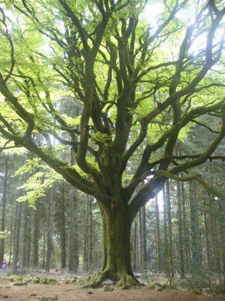 De coeur à corps Sexohérapie Lyon arbre Dr Dominique Chatton